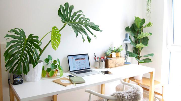 arredare piante